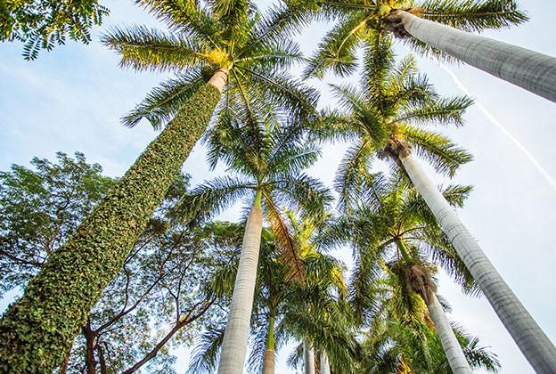 De pie por las palmas revista gente sinaloa - Jardin botanico las palmas ...