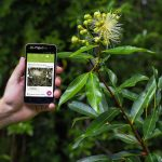 Pl@ntNet, la nueva app que identifica plantas