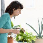 Aprende cómo cuidar tus plantas de interior