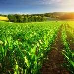 Sinaloa, máximo exponente en agricultura